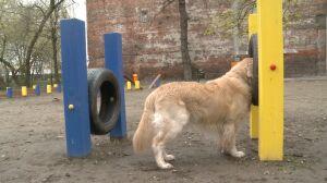 Niebezpieczne przeszkody w praskim parku dla psów