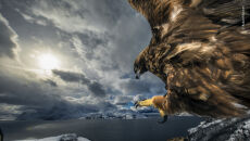 © Audun Rikardsen - Wildlife Photographer of the Year