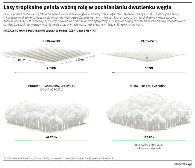 Lasy tropikalne pełnią ważna rolę w pochłanianiu CO2 (PAP/Reuters/Adam Ziemienowicz)
